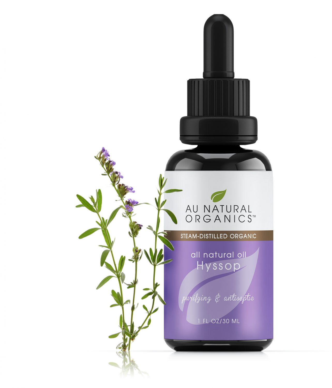 hyssop ingredient