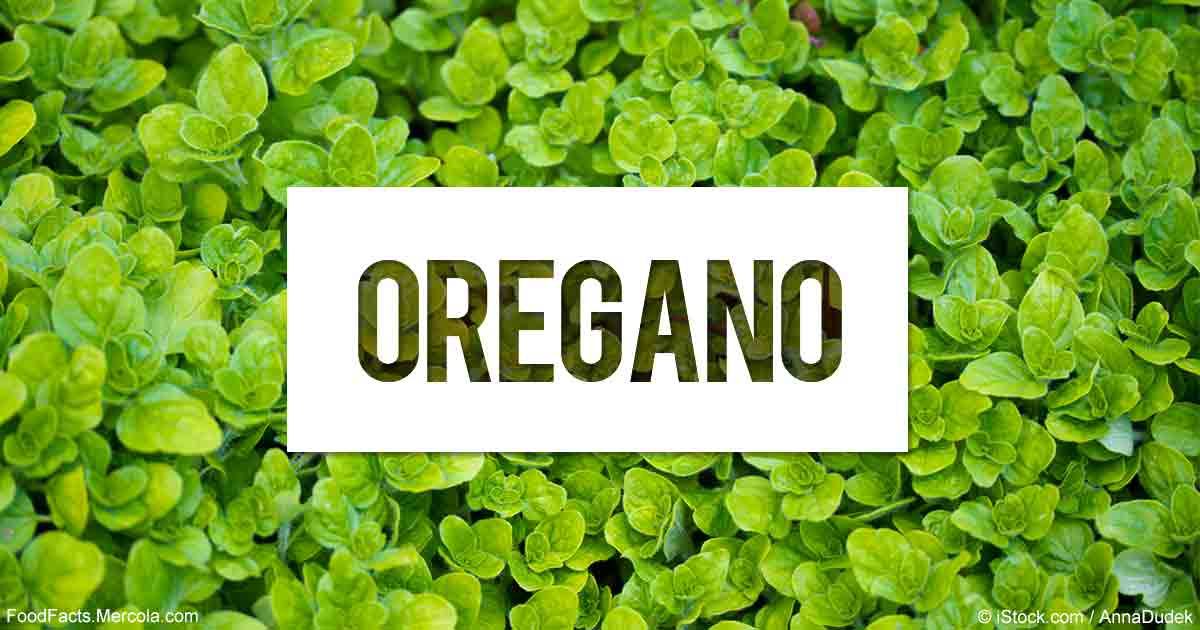 Health Benefits of Oregano Oil, the King of Essential Oils
